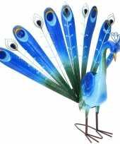 Tuinbeeld blauwe pauw 60 cm tuinbeeldje